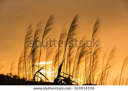 Beautiful  silhouette of flower at sunset - stock photo