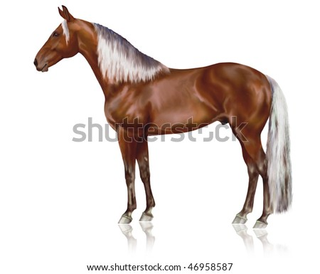 Beautiful silver bay Rocky Mountain horse on a white background - stock photo