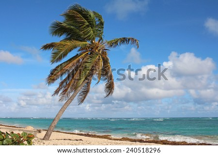 Beautiful single palm on quiet beach - stock photo