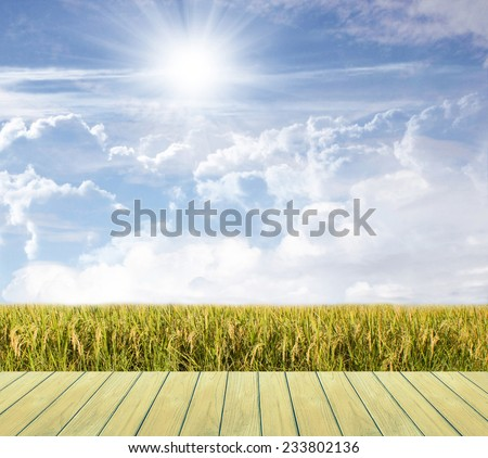 Beautiful sky and Rice field,Thailand - stock photo
