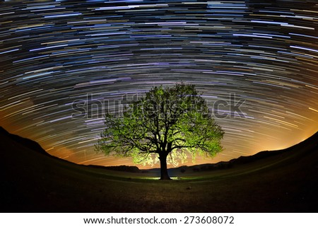 beautiful sky at night with startrails and silhouette of a tree - stock photo