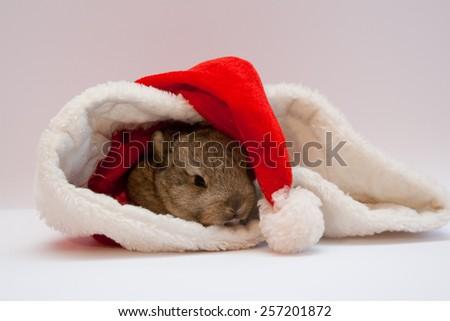 Beautiful small brown rabbit in Santa Claus hat - stock photo