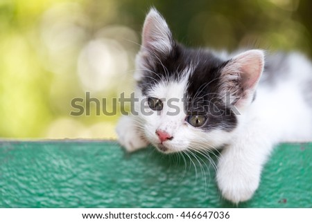 beautiful small kitten on nature