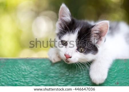 beautiful small kitten on nature - stock photo