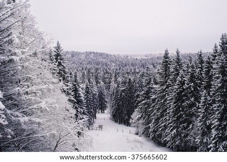 Beautiful snow forest in a winter like a card - stock photo