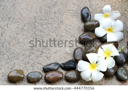 beautiful  softly flower on hard and colorful stone with freshwater imbue  - stock photo