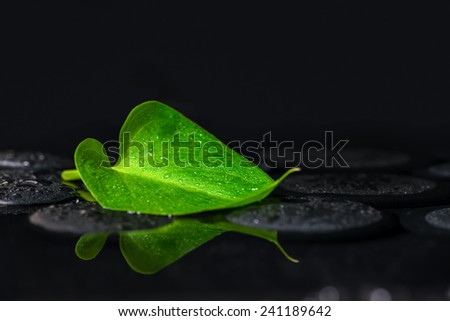 beautiful spa background of green leaf Calla lily on zen basalt stones with drops in reflection water - stock photo