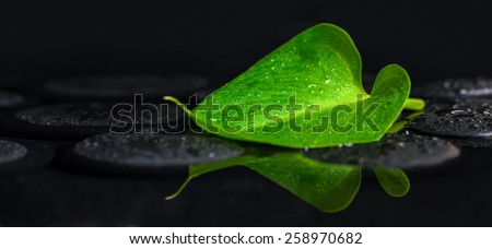 beautiful spa background of green leaf Calla lily on zen basalt stones with drops in reflection water, panorama  - stock photo