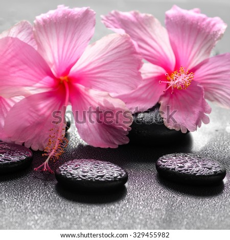 beautiful spa background of pink hibiscus flowers on zen basalt stone with drops, closeup - stock photo