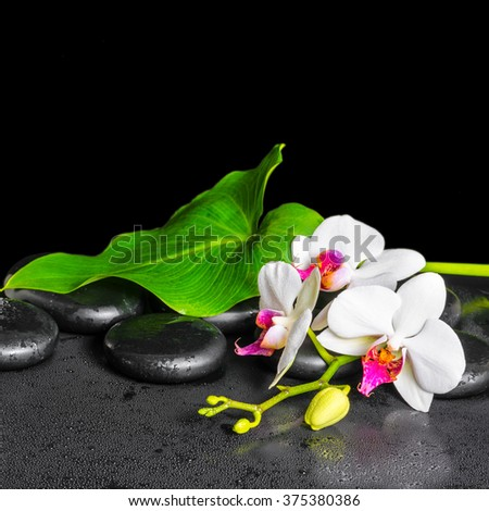 beautiful spa background of white orchid flower, phalaenopsis, green leaf with dew on black zen stones, close up - stock photo