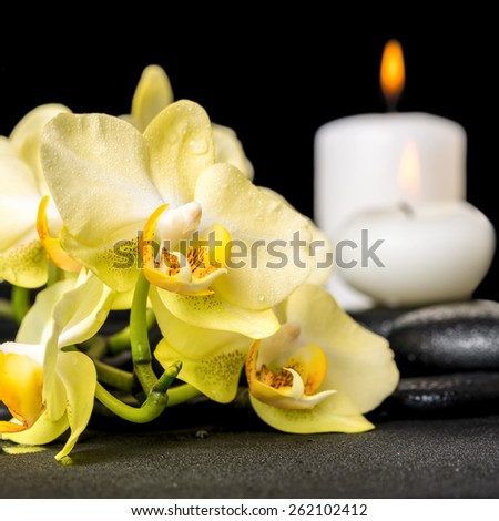 beautiful spa background of yellow orchid phalaenopsis and candles on black zen stones with drops, closeup  - stock photo