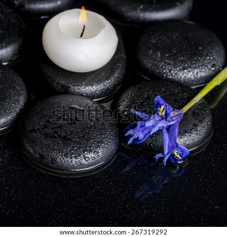 beautiful spa concept of blooming iris flower, candle and black zen stones on water, closeup  - stock photo