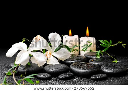 beautiful spa concept of blooming white hibiscus, twig with tendril passionflower and candles on zen basalt stones, with drops - stock photo