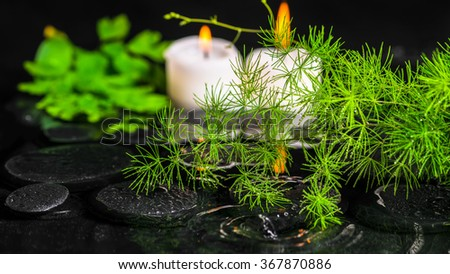 beautiful spa concept of green branch Asparagus with dew and candles on zen basalt stones in ripple reflection water, panorama - stock photo