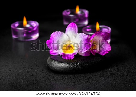 beautiful spa concept of purple orchid dendrobium with dew on black zen stone and lilac candles, closeup  - stock photo