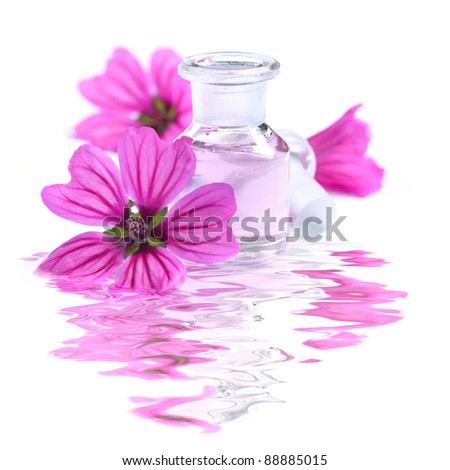 Beautiful Spa Scene with Essence of Flowers - Malva sylvestris - Medical plant - White Background