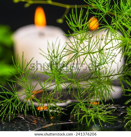 beautiful spa still life of green branch Asparagus with dew and candles on zen basalt stones in ripple reflection water, closeup - stock photo