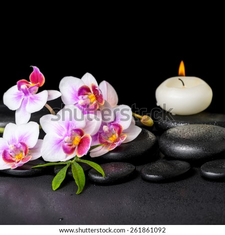 beautiful spa still life of purple orchid phalaenopsis, green leaf and candle on black zen stones with drops, closeup   - stock photo