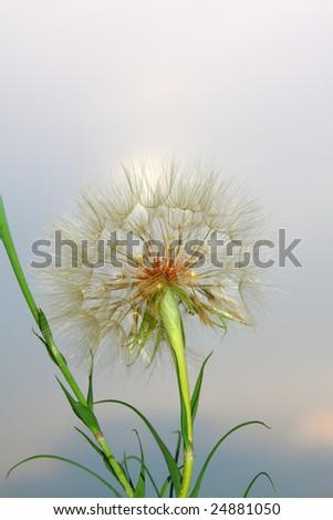 Beautiful Spring - stock photo