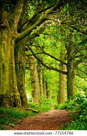 Beautiful spring colors in a Dutch forest in Arnhem, The Netherlands. - stock photo