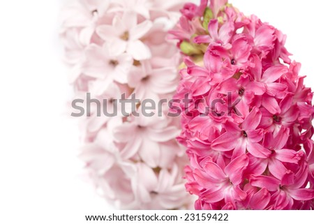 beautiful  spring flower