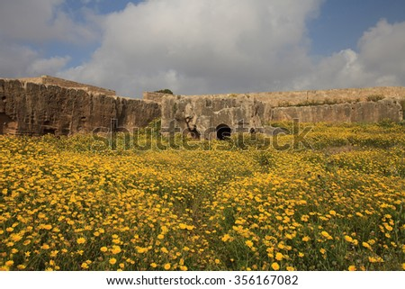 Beautiful spring flower field in the Ancient Tombs of the Kings in Paphos, Cyprus - stock photo