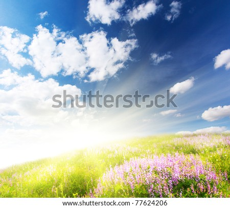 Beautiful spring flower with a green grass and the beautiful sky - stock photo