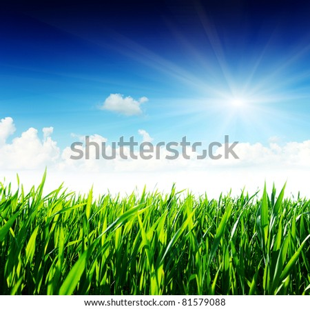 Beautiful spring flower with a green grass and the beautiful sky