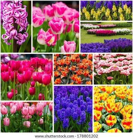 Beautiful spring flowers. - stock photo