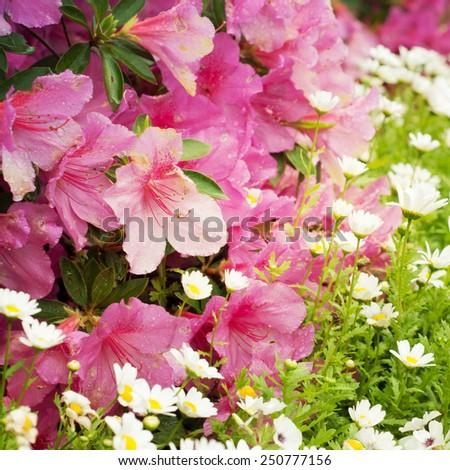 Beautiful spring flowers - stock photo