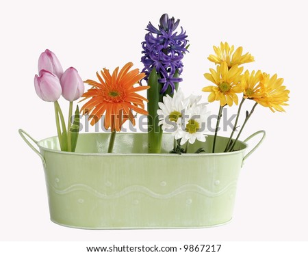beautiful spring flowers in green tin planter on white background