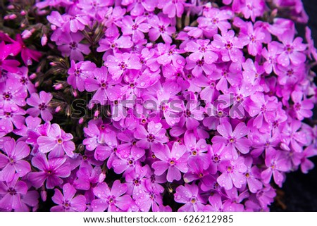 Beautiful spring flowers japan stock photo royalty free 626212985 beautiful spring flowers in japan mightylinksfo
