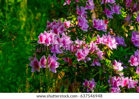 Beautiful spring flowers japan stock photo royalty free 637546948 beautiful spring flowers in japan mightylinksfo