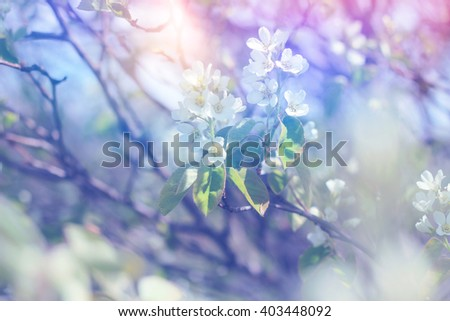 Beautiful spring flowers on blossoming tree