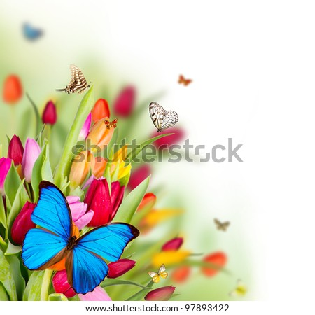 Beautiful spring flowers with butterflies - stock photo