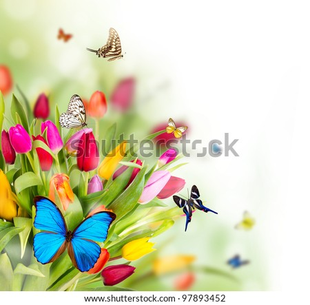 Gentil Beautiful Spring Flowers With Butterflies