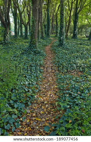 Beautiful spring forest mountain path - stock photo