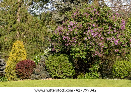 Beautiful spring garden design, with conifer trees, green grass and eneving sun. Luxury design, Gardening. Green garden in spring. - stock photo
