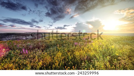 beautiful spring or summer filed with flowers on sunset, natural background - stock photo