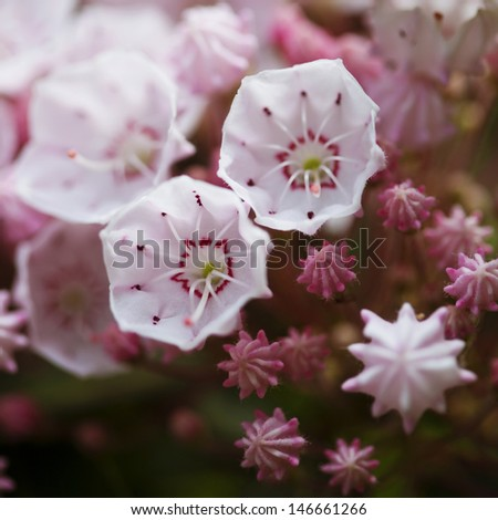Beautiful spring pink flowers background - stock photo