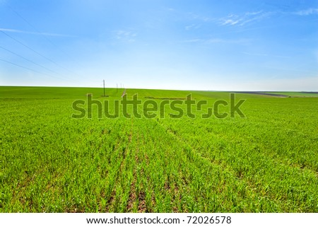 Beautiful spring wheat field (country landscape). - stock photo