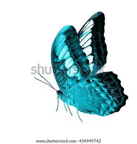 Beautiful standing camouflage pale green buttefly, the Clipper Butterfly (Parthenos sylvia) in fancy color profile with fully wings sweeping isolated on white background