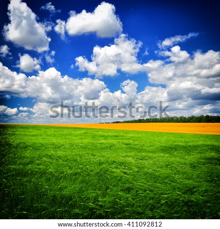 Beautiful Summer day on the green field against a dark blue sky. The image in the dark frame. - stock photo