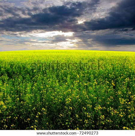 beautiful summer evening landscape in the fields - stock photo