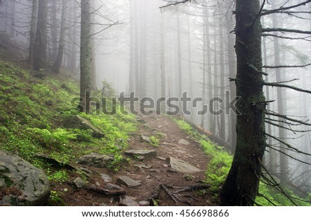 Beautiful summer forest mountain path - stock photo