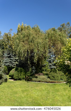 Beautiful summer garden design, with conifer trees, green grass and morning sun. Cut grass, Professional luxury gardening concept.