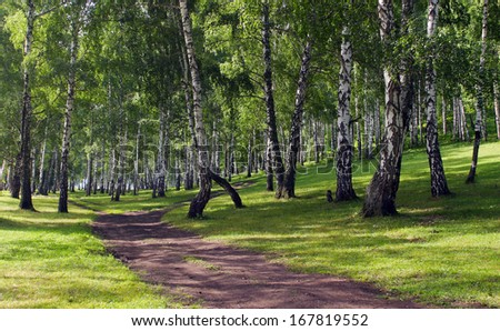 beautiful summer landscape birch grove paths and sunlight filtering through the foliage - stock photo