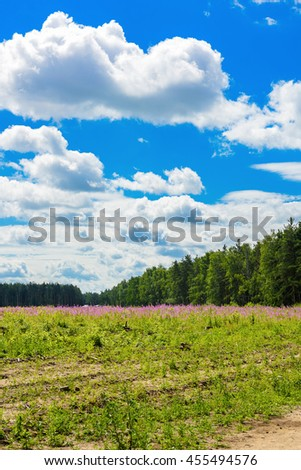 Beautiful summer landscape in Russia background