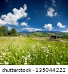 Beautiful summer landscape in the mountains village with a field of chamomiles - stock photo