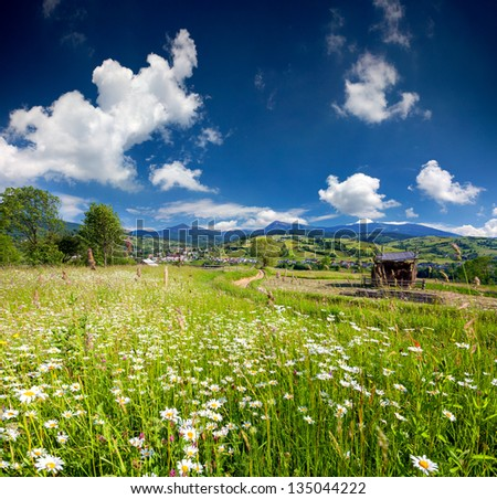 Beautiful summer landscape in the mountains village with a field of chamomiles